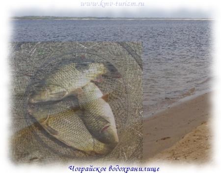 какая рыба ловится на технопланктон