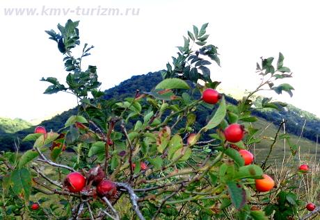 Погода в саратовской области романовский район